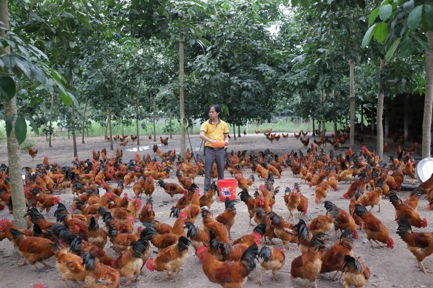 chăn nuôi miền Trung