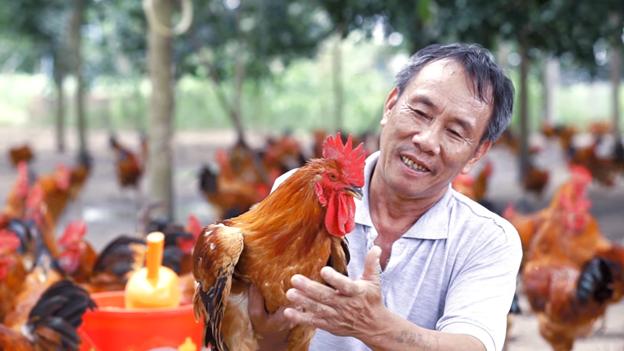 Gói dịch vụ tư vấn chăn nuôi gà toàn diện – cùng nông dân làm giàu