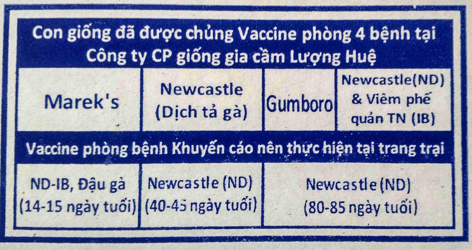 Quy trình vaccine Lượng Huệ