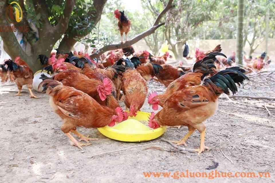 Các cách giúp người chăn nuôi tiết kiệm cả tấn thức ăn - Tiết kiệm chi phí trong chăn nuôi
