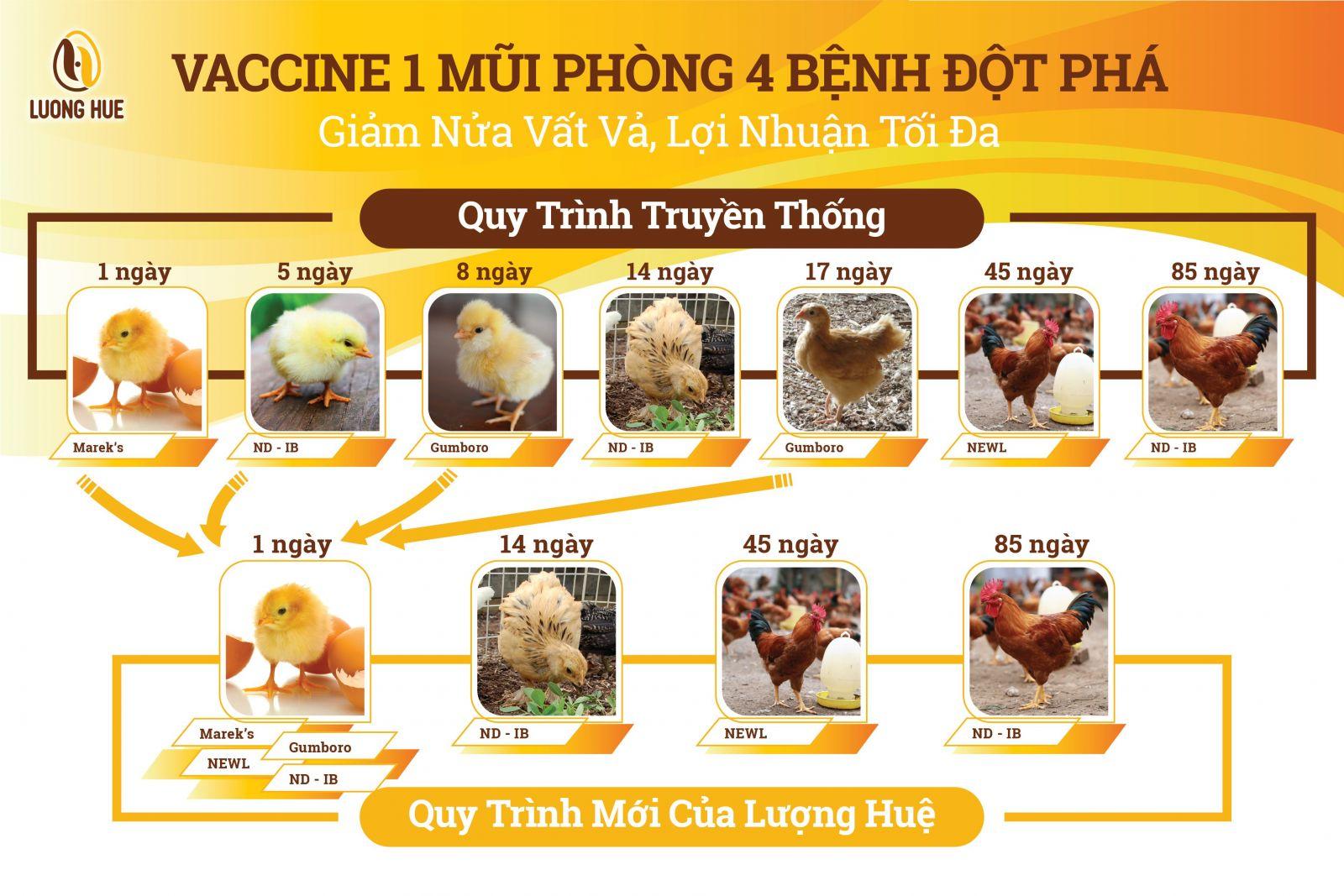 Lợi ích từ việc tiêm phòng vắc xin trong chăn nuôi gà Ta - Giảm nửa nỗi lo - vất vả