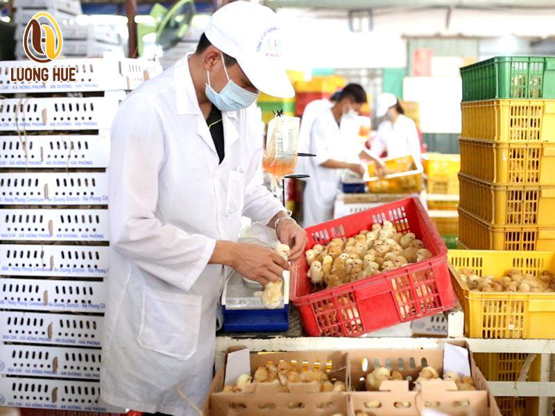 Công nghệ vaccine từ pháp giúp kiểm soát tối ưu bệnh cúm gia cầm cho người chăn nuôi Việt - Vaccine 5 bệnh