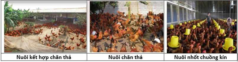 Các kiểu chuồng nuôi gà
